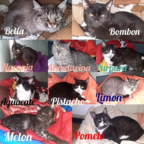 10 Kätzchen aus der Tötung gerettet
